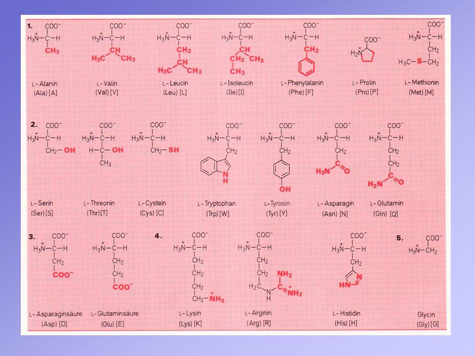 Versuch 2: Untersuchung des Filterrückstandes (Casein) auf Eiweiss (Biuret-Probe): Struktur des Kupfer-Protein-Komplexes Casein: Violettfärbung positiver Proteinnachweis