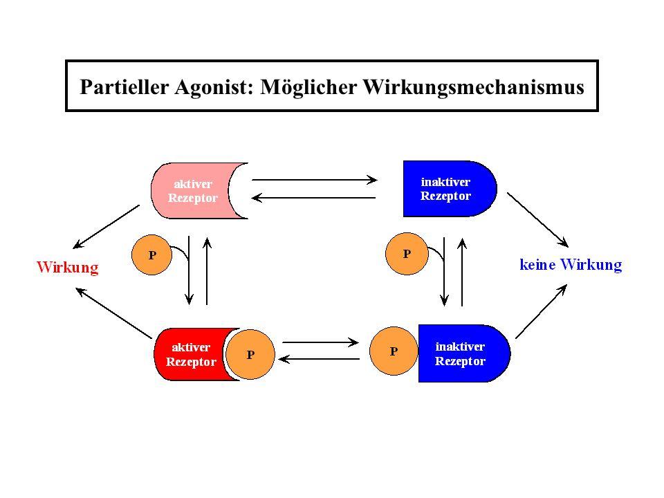 Partieller Agonist: Möglicher Wirkungsmechanismus