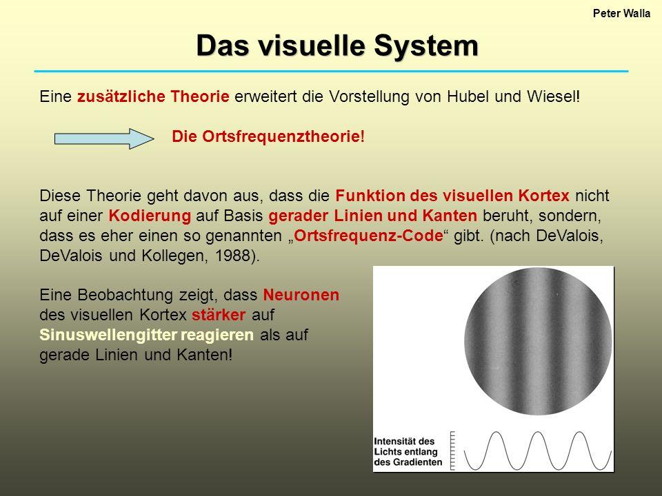 Peter Walla Das visuelle System Eine zusätzliche Theorie erweitert die Vorstellung von Hubel und Wiesel! Die Ortsfrequenztheorie! Diese Theorie geht d