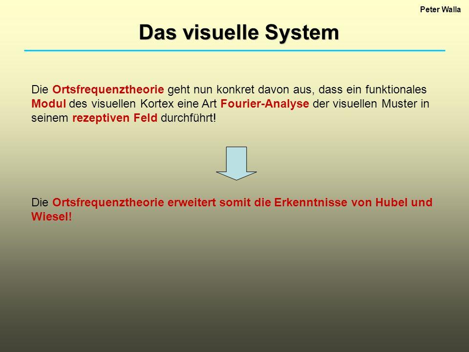 Peter Walla Das visuelle System Die Ortsfrequenztheorie geht nun konkret davon aus, dass ein funktionales Modul des visuellen Kortex eine Art Fourier-