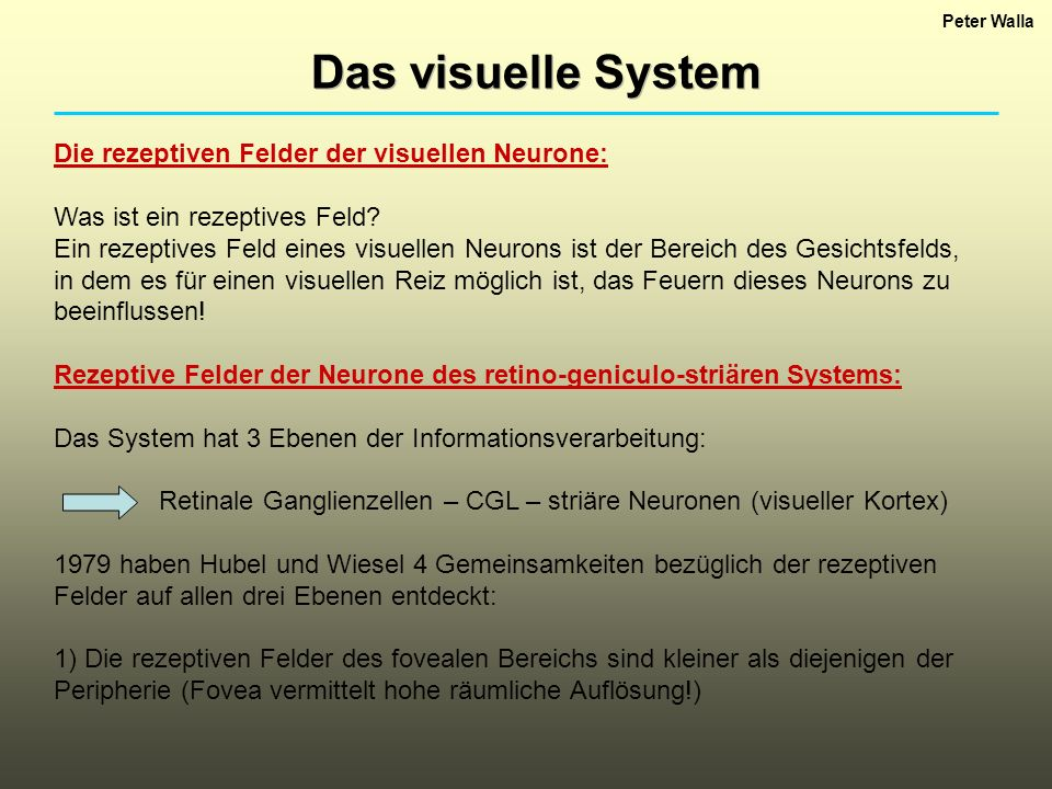 Peter Walla Das visuelle System Die rezeptiven Felder der visuellen Neurone: Was ist ein rezeptives Feld? Ein rezeptives Feld eines visuellen Neurons