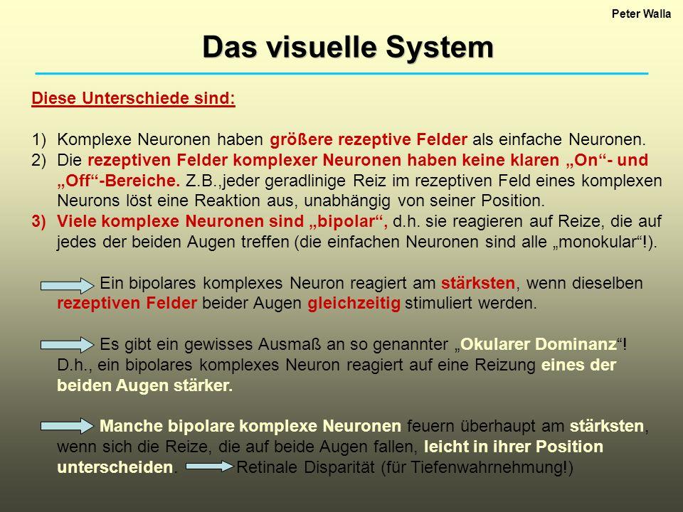 Peter Walla Das visuelle System Diese Unterschiede sind: 1)Komplexe Neuronen haben größere rezeptive Felder als einfache Neuronen. 2)Die rezeptiven Fe