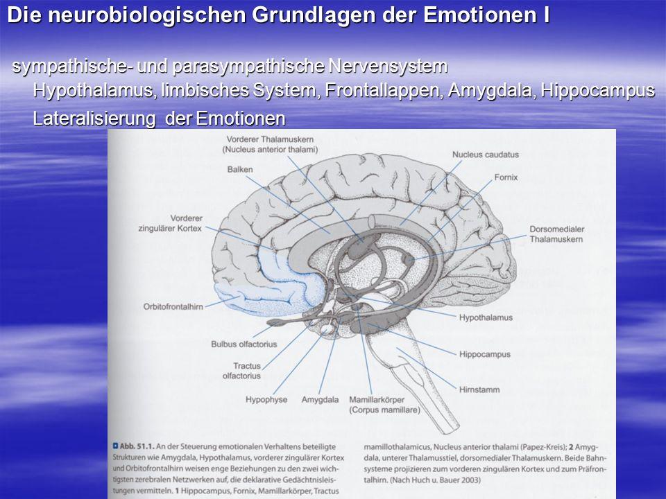 Die neurobiologischen Grundlagen der Emotionen I sympathische- und parasympathische Nervensystem sympathische- und parasympathische Nervensystem Hypot