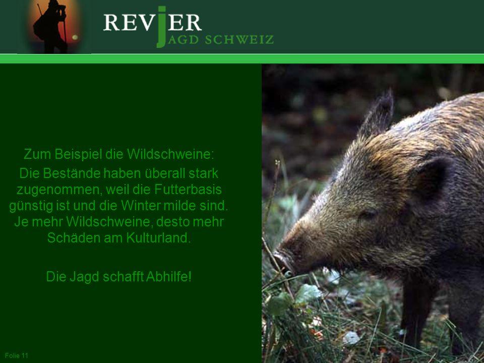 Erstellt: 11.10.2005Folie 11 Zum Beispiel die Wildschweine: Die Bestände haben überall stark zugenommen, weil die Futterbasis günstig ist und die Wint