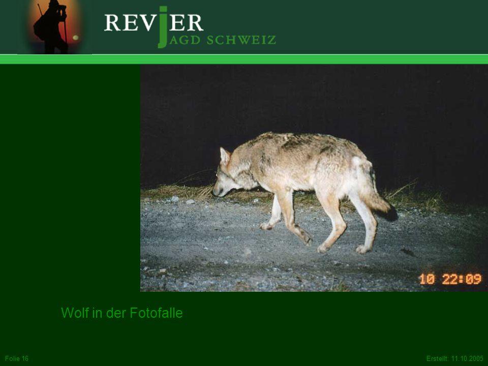 Erstellt: 11.10.2005Folie 16 Wolf in der Fotofalle