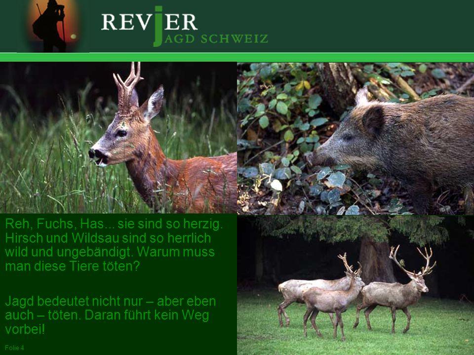 Erstellt: 11.10.2005Folie 4 Reh, Fuchs, Has... sie sind so herzig. Hirsch und Wildsau sind so herrlich wild und ungebändigt. Warum muss man diese Tier