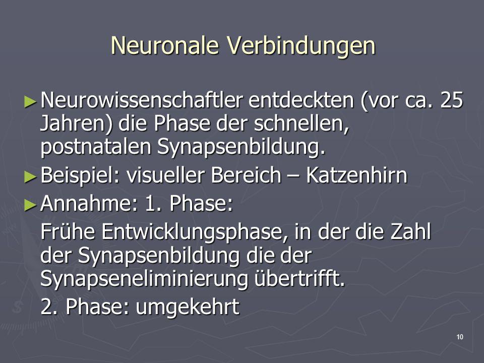 10 Neuronale Verbindungen Neurowissenschaftler entdeckten (vor ca. 25 Jahren) die Phase der schnellen, postnatalen Synapsenbildung. Neurowissenschaftl