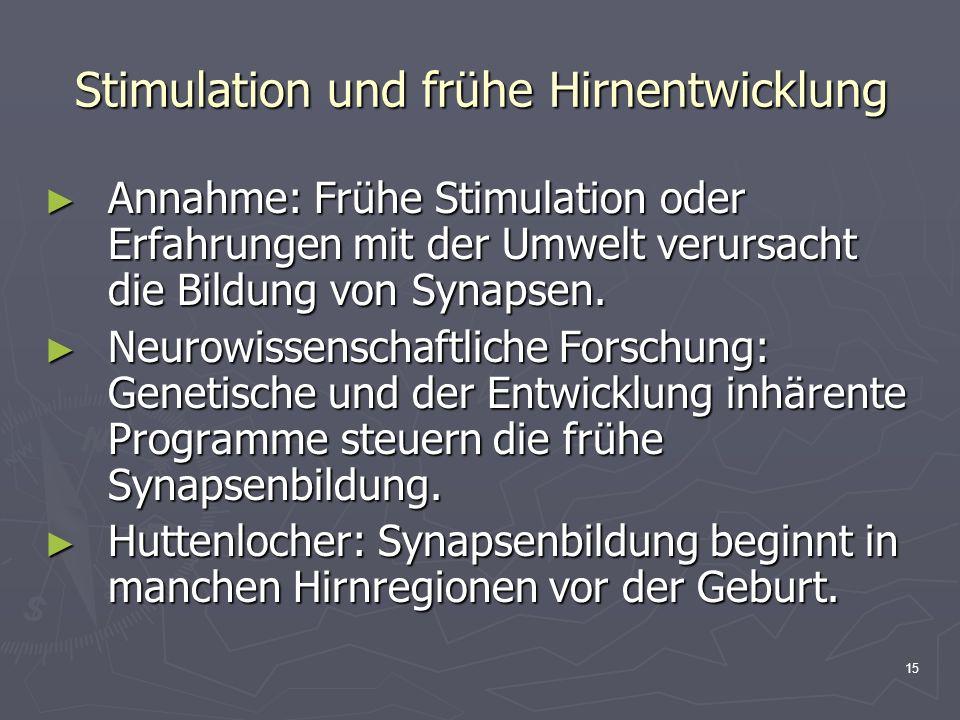 15 Stimulation und frühe Hirnentwicklung Annahme: Frühe Stimulation oder Erfahrungen mit der Umwelt verursacht die Bildung von Synapsen. Annahme: Früh