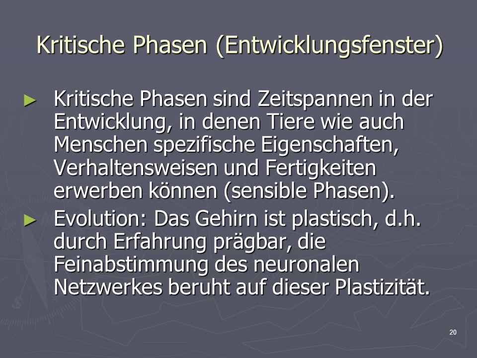 20 Kritische Phasen (Entwicklungsfenster) Kritische Phasen sind Zeitspannen in der Entwicklung, in denen Tiere wie auch Menschen spezifische Eigenscha