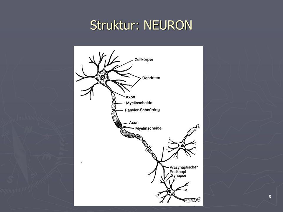 6 Struktur: NEURON