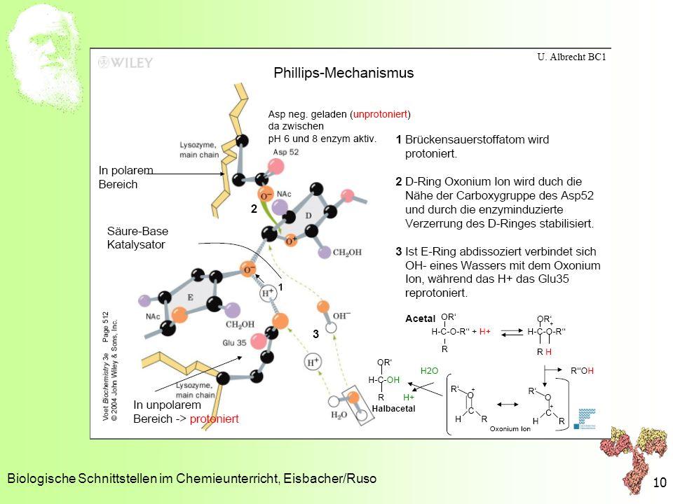 Mechanische Barrieren Lysozym Biologische Schnittstellen im Chemieunterricht, Eisbacher/Ruso 10