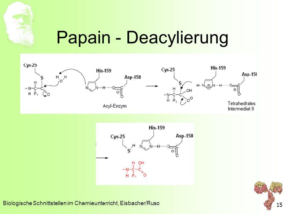 Papain - Deacylierung Biologische Schnittstellen im Chemieunterricht, Eisbacher/Ruso 15