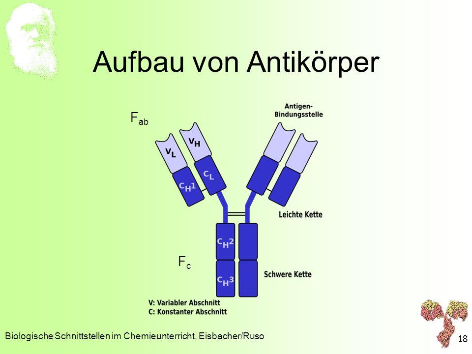 Aufbau von Antikörper Biologische Schnittstellen im Chemieunterricht, Eisbacher/Ruso 18 F ab FcFc