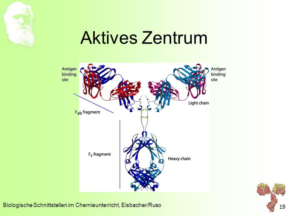 Aktives Zentrum Biologische Schnittstellen im Chemieunterricht, Eisbacher/Ruso 19