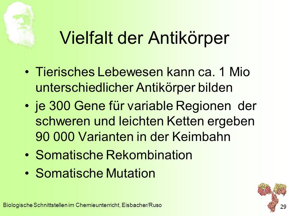 Vielfalt der Antikörper Tierisches Lebewesen kann ca. 1 Mio unterschiedlicher Antikörper bilden je 300 Gene für variable Regionen der schweren und lei