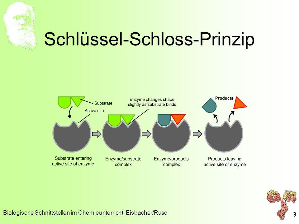 Schlüssel-Schloss-Prinzip Biologische Schnittstellen im Chemieunterricht, Eisbacher/Ruso 3