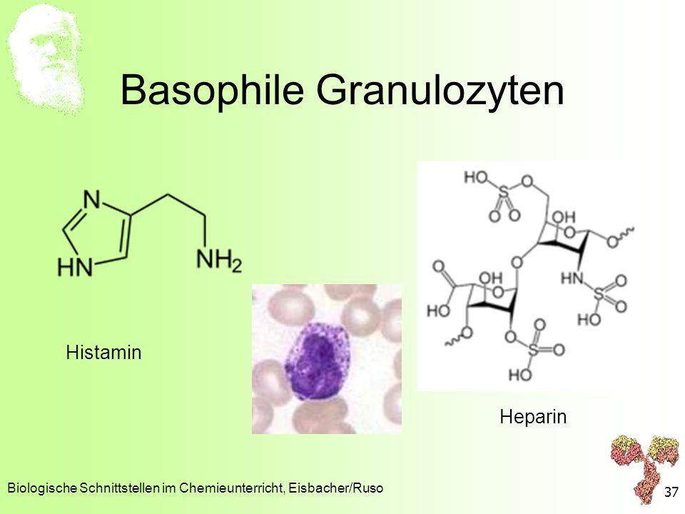 Basophile Granulozyten Biologische Schnittstellen im Chemieunterricht, Eisbacher/Ruso 37 Histamin Heparin