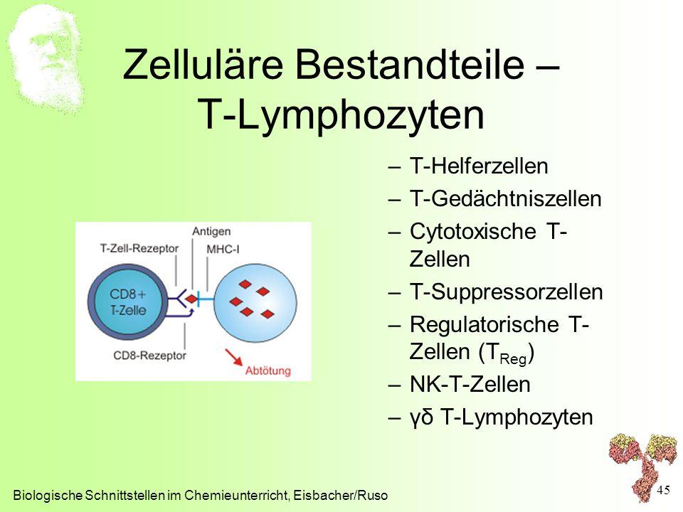 Zelluläre Bestandteile – T-Lymphozyten –T-Helferzellen –T-Gedächtniszellen –Cytotoxische T- Zellen –T-Suppressorzellen –Regulatorische T- Zellen (T Re