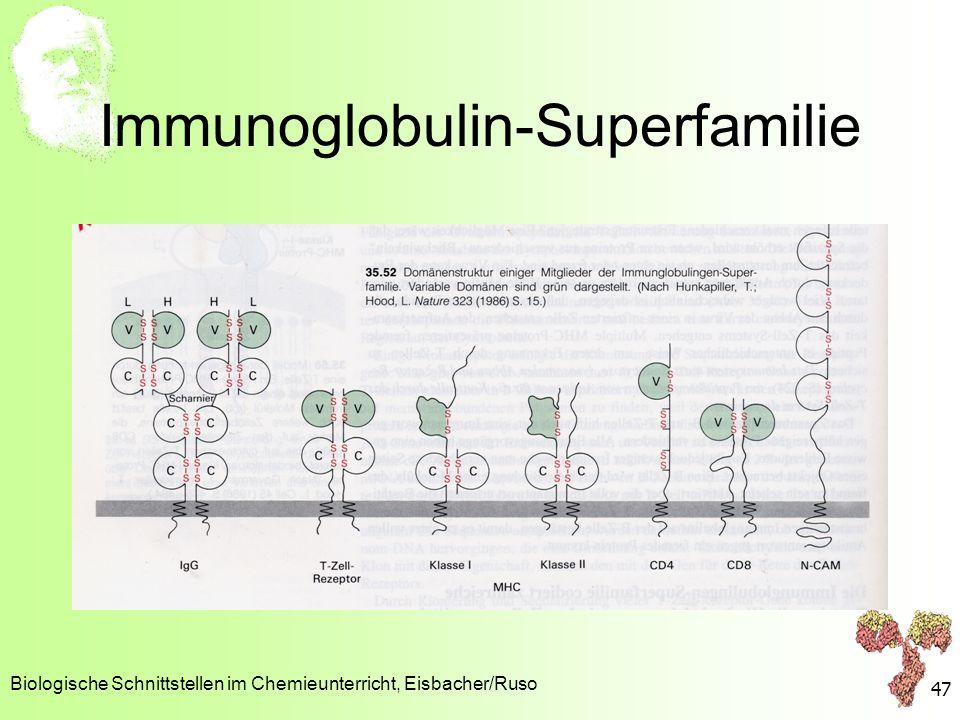 Immunoglobulin-Superfamilie Biologische Schnittstellen im Chemieunterricht, Eisbacher/Ruso 47