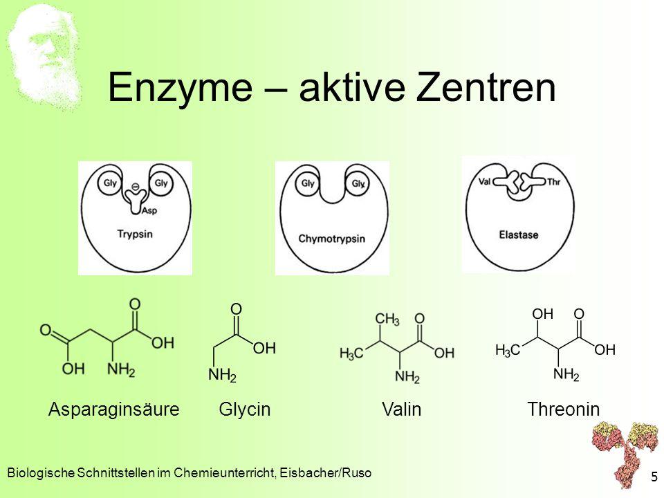 Enzyme – aktive Zentren Biologische Schnittstellen im Chemieunterricht, Eisbacher/Ruso 5 Asparaginsäure Glycin Valin Threonin