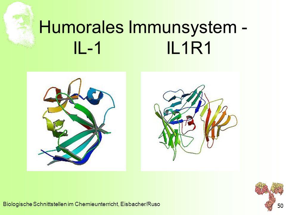 Humorales Immunsystem - IL-1 IL1R1 Biologische Schnittstellen im Chemieunterricht, Eisbacher/Ruso 50
