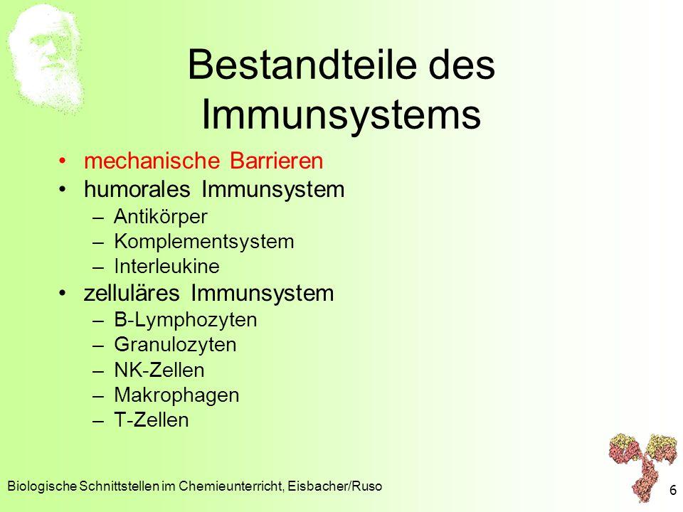 Lysozym Biologische Schnittstellen im Chemieunterricht, Eisbacher/Ruso 7 http://www.biologie.uni-hamburg.de/lehre/bza/1hew/1hewm.htm