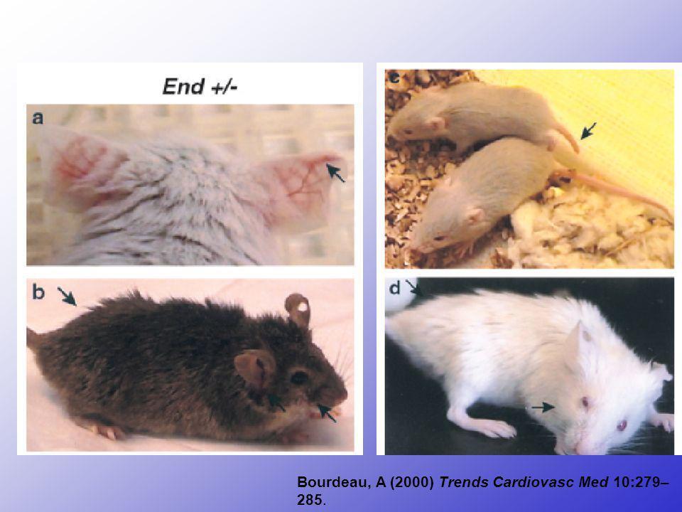 Erkrankungen im TGFR-Komplex Eng C. (2001) Nature Genetics 28:105-107.