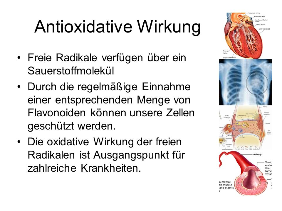 Antioxidative Wirkung Freie Radikale verfügen über ein Sauerstoffmolekül Durch die regelmäßige Einnahme einer entsprechenden Menge von Flavonoiden kön