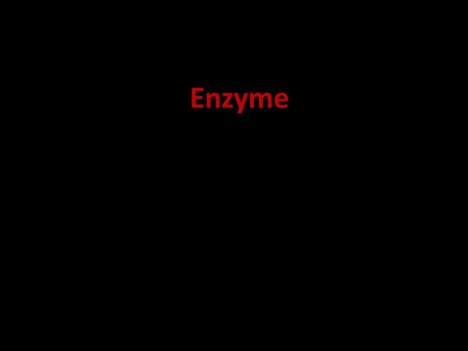 bis ins Enzyme kommen in vielen Prozessen zum 19.