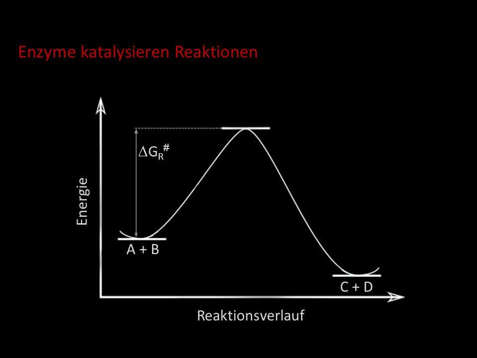 Enzyme katalysieren Reaktionen Energie Reaktionsverlauf G R # E + A + B E + C + D G RK # EAB