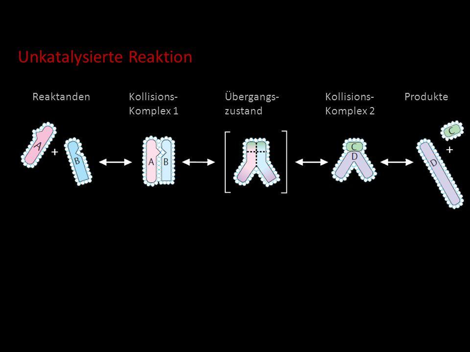 ReaktandenKollisions- Komplex 1 Übergangs- zustand Kollisions- Komplex 2 Produkte Unkatalysierte Reaktion