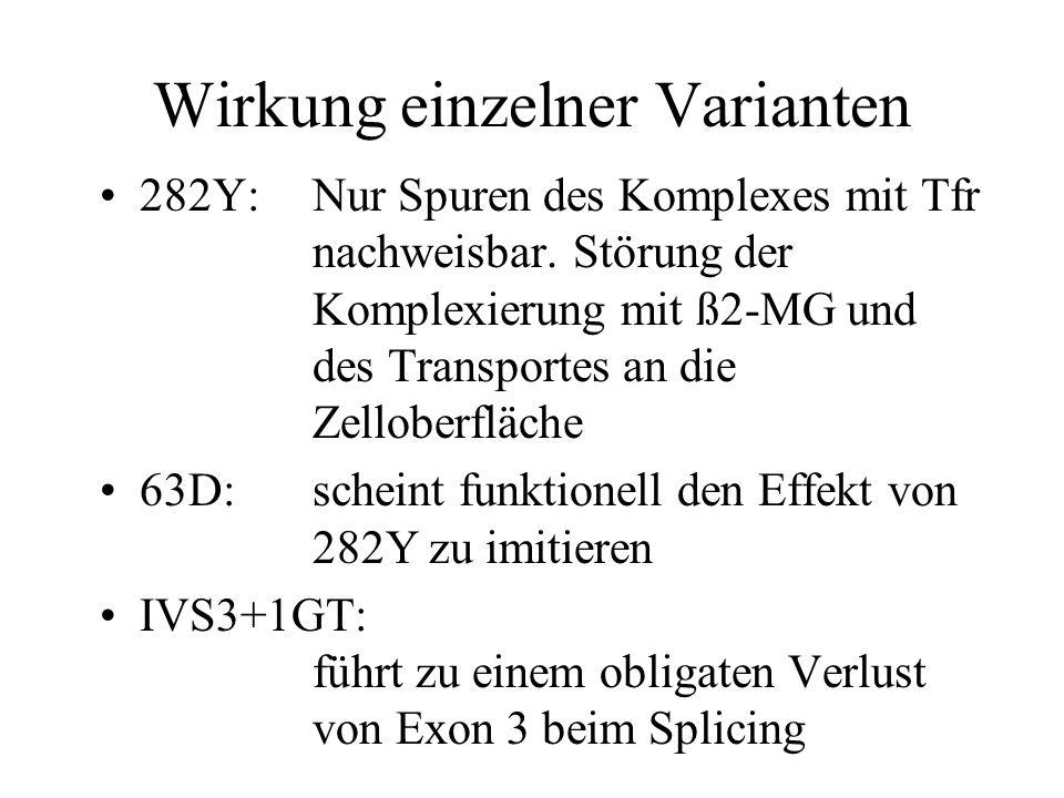 Wirkung einzelner Varianten 282Y:Nur Spuren des Komplexes mit Tfr nachweisbar. Störung der Komplexierung mit ß2-MG und des Transportes an die Zellober