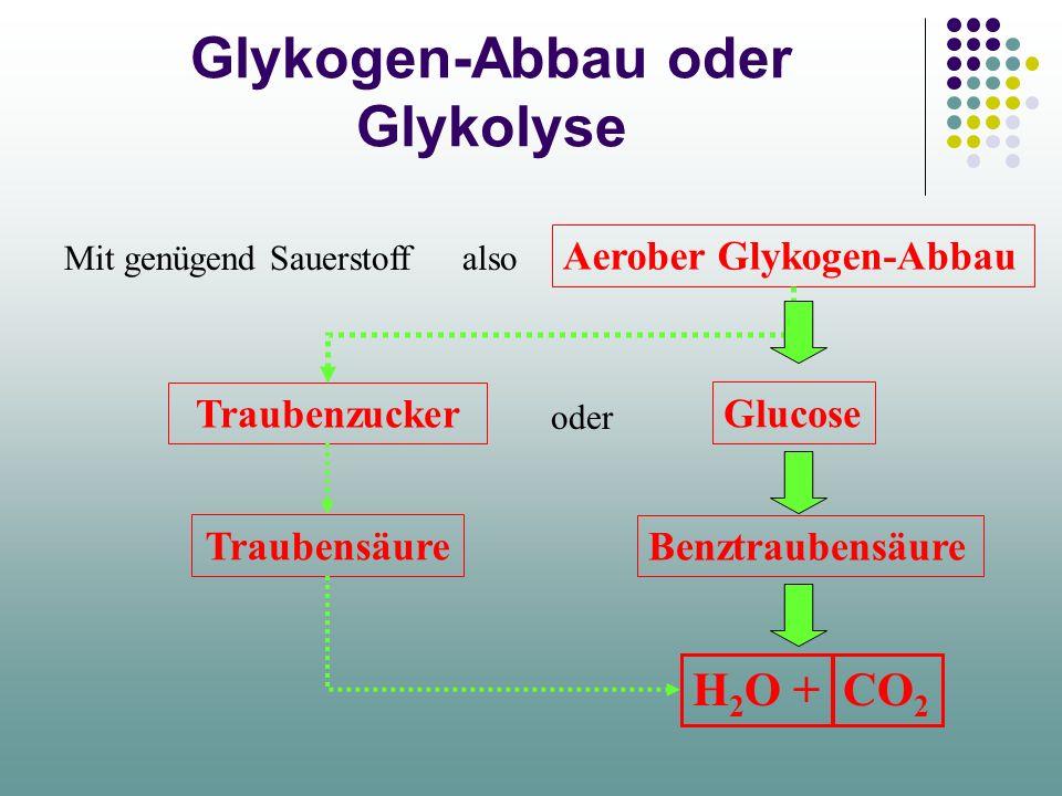 Stoffwechsel des Muskels Glykogen O2O2 Thermische Energie: =Wärme Mechanische Energie: =Arbeit Kohlensäure CO 2 / H 2 O Milchsäure Der Muskel braucht