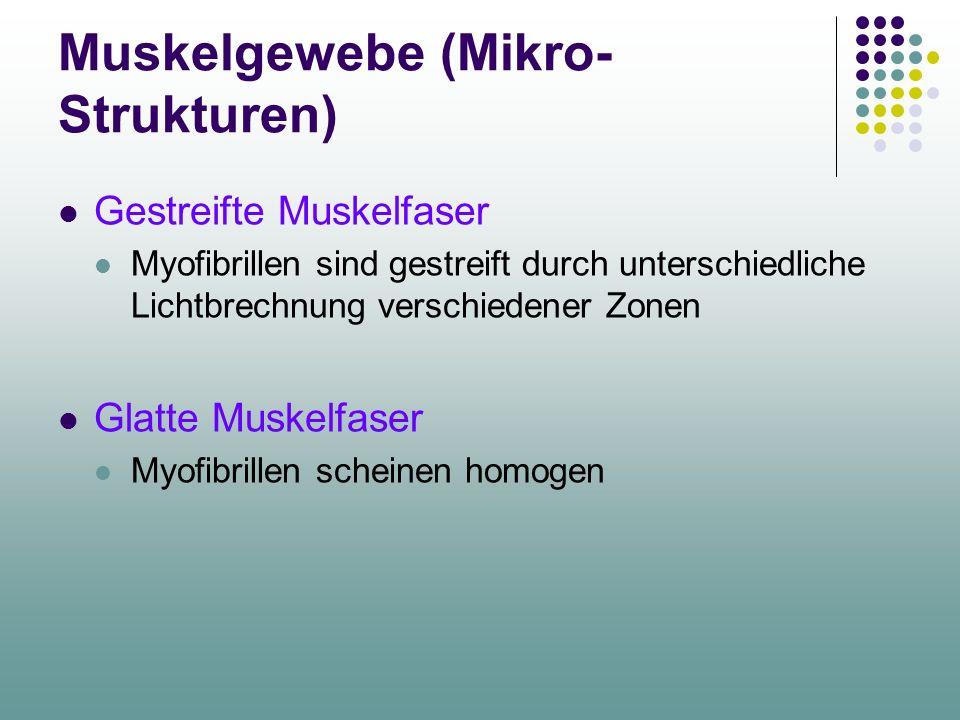 Muskelgewebe (Mikro- Strukturen) Gestreifte Muskelfaser Myofibrillen sind gestreift durch unterschiedliche Lichtbrechnung verschiedener Zonen Glatte Muskelfaser Myofibrillen scheinen homogen