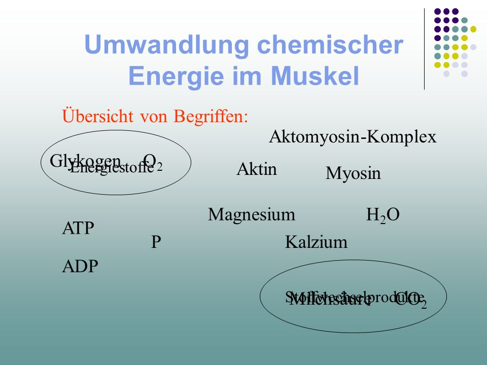 Umwandlung chemischer Energie im Muskel Übersicht von Begriffen: Aktin Myosin ATP Aktomyosin-Komplex ADP Magnesium Kalzium H2OH2O P GlykogenO2O2 MilchsäureCO 2 Energiestoffe Stoffwechselprodukte