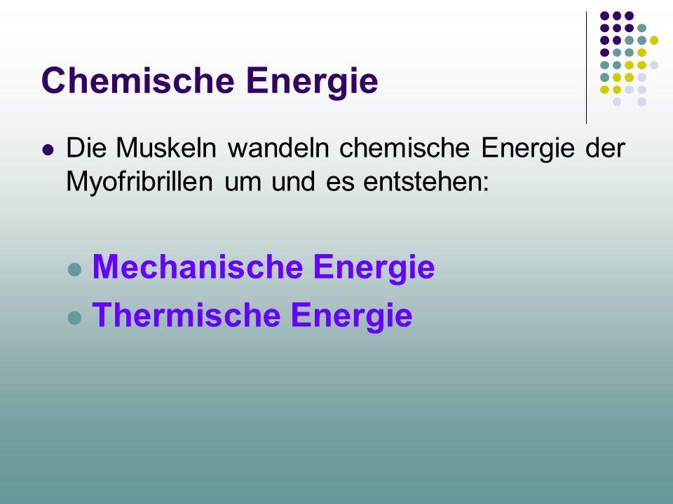 Chemische Energie Die Muskeln wandeln chemische Energie der Myofribrillen um und es entstehen: Mechanische Energie Thermische Energie