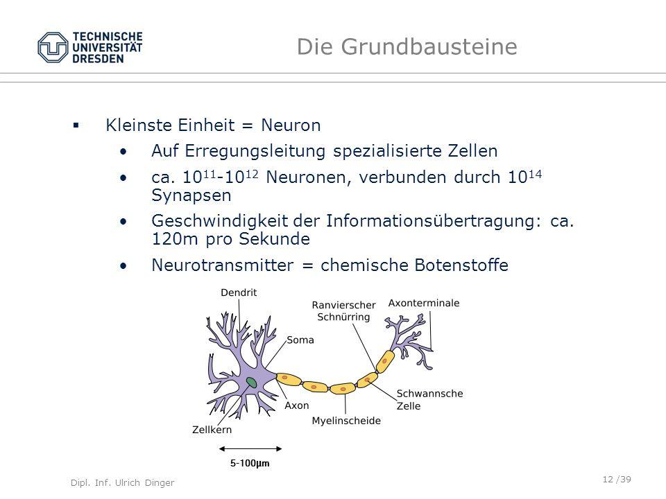 Dipl. Inf. Ulrich Dinger /39 Die Grundbausteine Kleinste Einheit = Neuron Auf Erregungsleitung spezialisierte Zellen ca. 10 11 -10 12 Neuronen, verbun