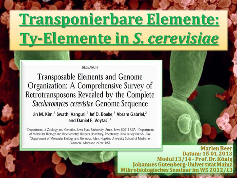 Transpositions-Ereignis: Insertion eines unabhängigen Ty1-Elements auf Chr VIII (~12 kb telomere–proximal to the solo Ty1 LTR) Ty1/Ty2 neighbor-joining Baum unterstützt hohen Verwandtschaftsgrad zwischen duplizierten solo-LTRsTranspositions-Ereignis: Insertion eines unabhängigen Ty1-Elements auf Chr VIII (~12 kb telomere–proximal to the solo Ty1 LTR) Ty1/Ty2 neighbor-joining Baum unterstützt hohen Verwandtschaftsgrad zwischen duplizierten solo-LTRs Abb.15: Ausschnitt aus dem Ty1/Ty2 neighbor-joining Baum Abb.14: Entstehung der telomerischen Organisation der Ty1- Elemente auf Chr I und VIII