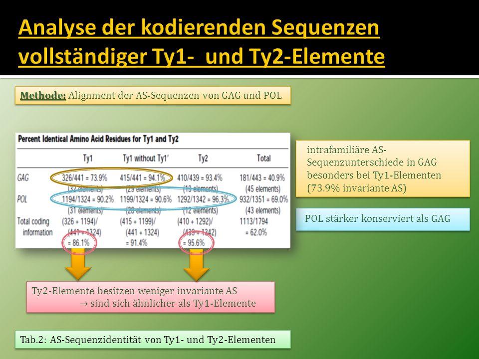 POL stärker konserviert als GAG Methode: Methode: Alignment der AS-Sequenzen von GAG und POL Ty2-Elemente besitzen weniger invariante AS sind sich ähn
