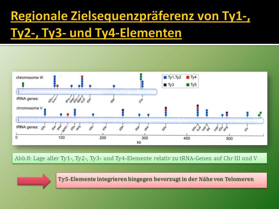 Abb.8: Lage aller Ty1-, Ty2-, Ty3- und Ty4-Elemente relativ zu tRNA-Genen auf Chr III und V Ty5-Elemente integrieren hingegen bevorzugt in der Nähe vo