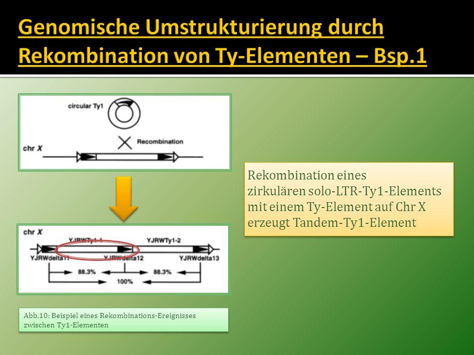Rekombination eines zirkulären solo-LTR-Ty1-Elements mit einem Ty-Element auf Chr X erzeugt Tandem-Ty1-Element Rekombination eines zirkulären solo-LTR
