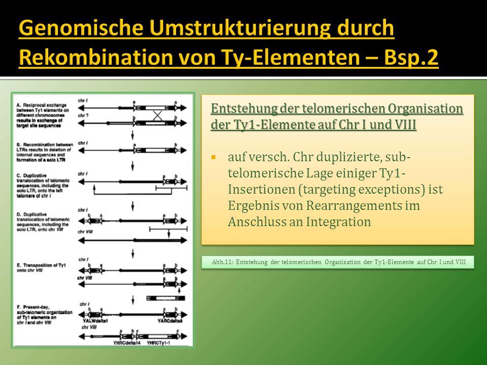 Entstehung der telomerischen Organisation der Ty1-Elemente auf Chr I und VIII auf versch. Chr duplizierte, sub- telomerische Lage einiger Ty1- Inserti