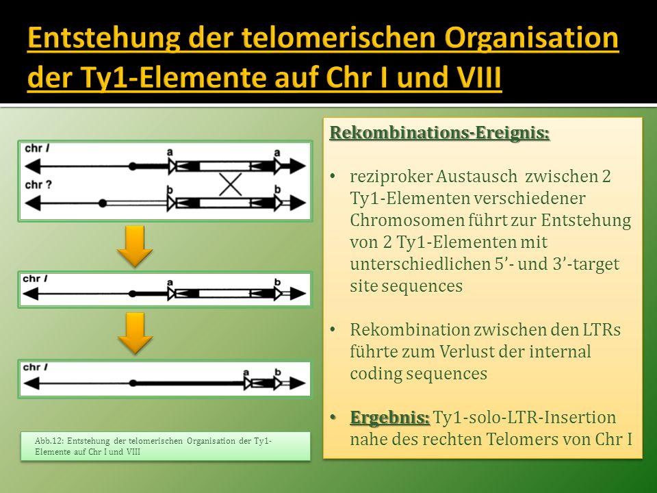 Rekombinations-Ereignis: reziproker Austausch zwischen 2 Ty1-Elementen verschiedener Chromosomen führt zur Entstehung von 2 Ty1-Elementen mit untersch
