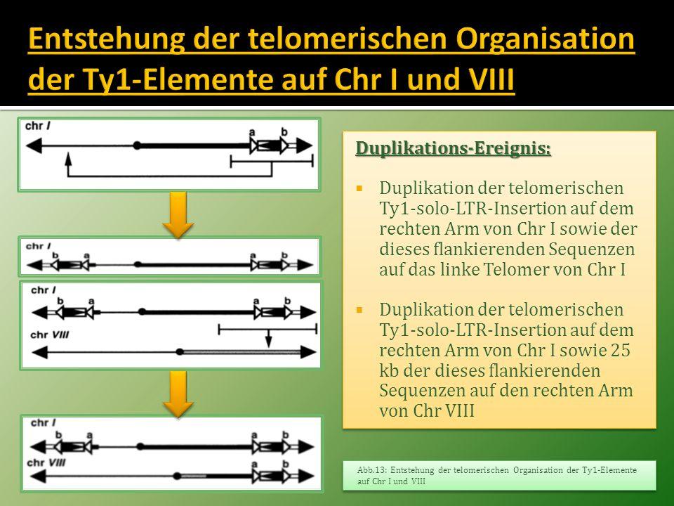 Duplikations-Ereignis: Duplikation der telomerischen Ty1-solo-LTR-Insertion auf dem rechten Arm von Chr I sowie der dieses flankierenden Sequenzen auf
