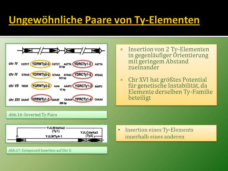 Insertion von 2 Ty-Elementen in gegenläufiger Orientierung mit geringem Abstand zueinander Chr XVI hat größtes Potential für genetische Instabilität,