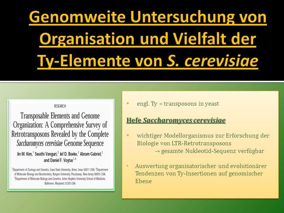 engl. Ty = transposons in yeast Hefe Saccharomyces cerevisiae wichtiger Modellorganismus zur Erforschung der Biologie von LTR-Retrotransposons gesamte