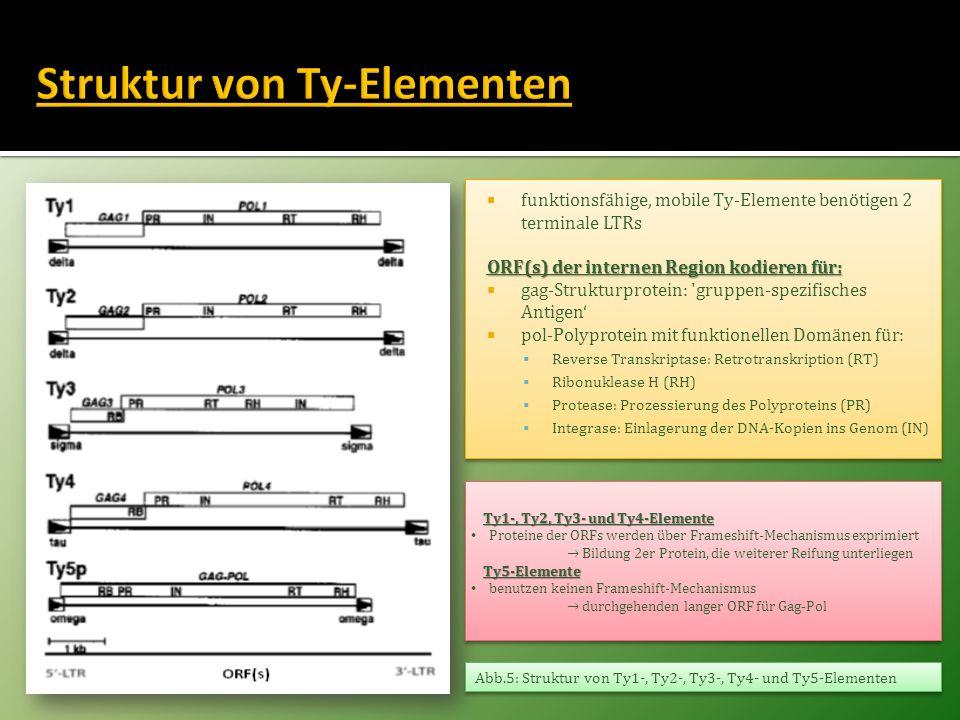 Methode: Screening der Genomsequenz mit Ty1- bis Ty5-LTR-EingabesequenzenErgebnis: 331 identifizierte Ty-Insertionen 15% komplette Elemente 85% LTR-Fragmente oder solo-LTRMethode: Screening der Genomsequenz mit Ty1- bis Ty5-LTR-EingabesequenzenErgebnis: 331 identifizierte Ty-Insertionen 15% komplette Elemente 85% LTR-Fragmente oder solo-LTR Tab.1: Chromosomale Verteilung von Ty-Elementen