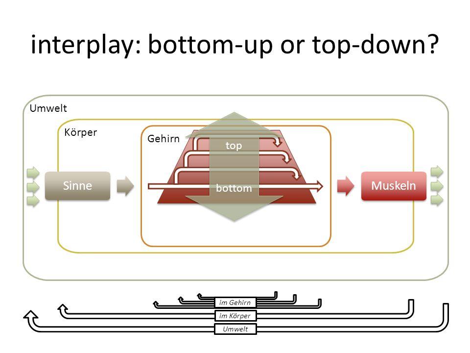 interplay: bottom-up or top-down? Umwelt Körper Sinne Gehirn Muskeln top bottom top bottom Umwelt im Körper im Gehirn