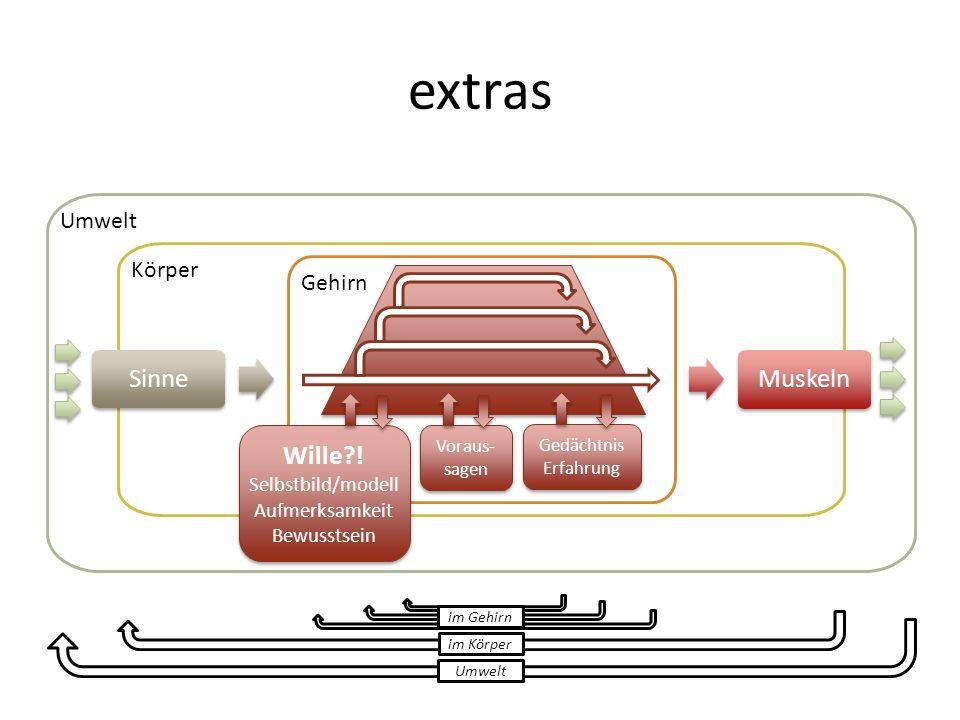 extras Umwelt Körper Sinne Gehirn Muskeln Umwelt im Körper im Gehirn Gedächtnis Erfahrung Wille?! Selbstbild/modell Aufmerksamkeit Bewusstsein Wille?!