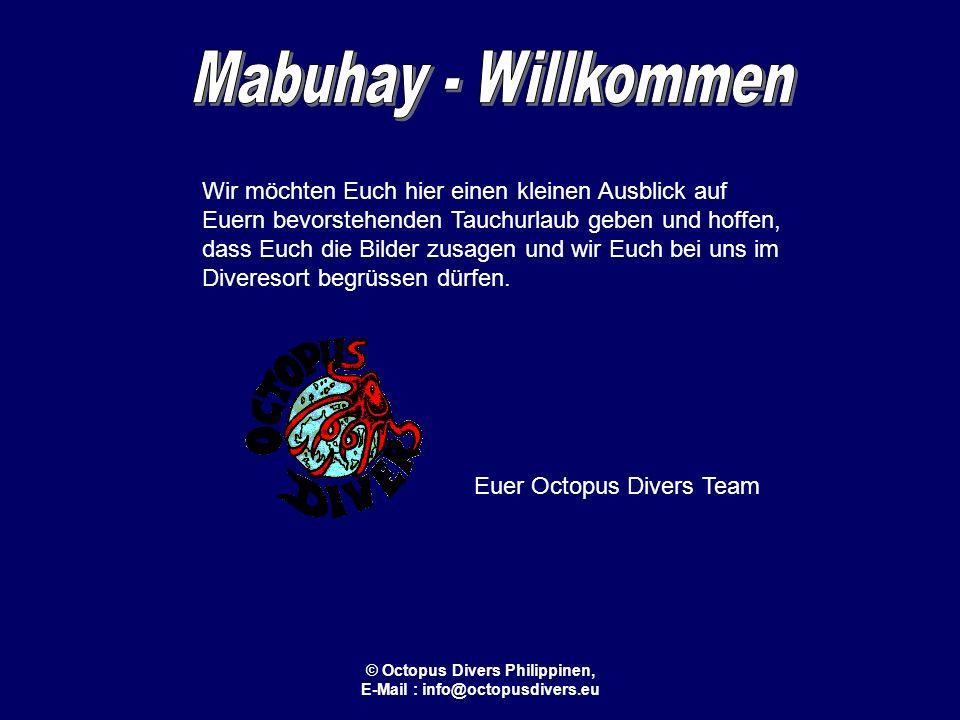 © Octopus Divers Philippinen, E-Mail : info@octopusdivers.eu